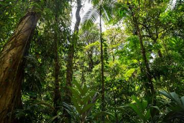 grüner dichter Dschungel in Costa Rica