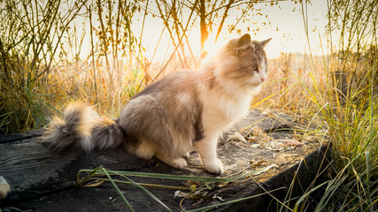 Toned shot of cat sitting on log at lake at sunrise