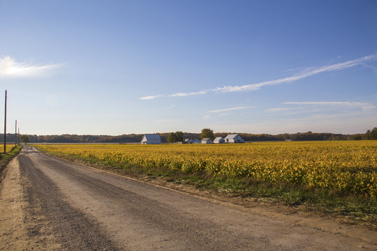 Country road by farm and bean fields.