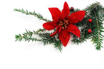 Christmas poinsettia flower, pine tree branch and mistletoe for decoration poinsettia