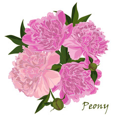 Peony  flower  in realistic hand-drawn style