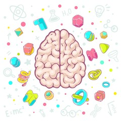 Vector colorful illustration of model of human brain top view on