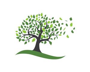 Tree leaf vector logo design, eco-friendly concept