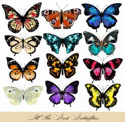 Set of realistic vector butterflies for design