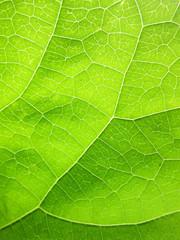 Closeup of green leaf pattern
