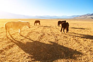 Horses eating at grass land