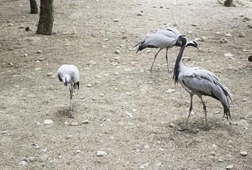 Herons in park