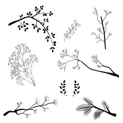 branches,hand draw