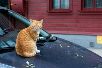 Stray cats on the car