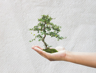 Human hand holding medium green plant with soil on blurred abstr