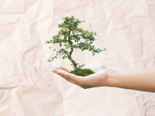 Human hand holding medium green plant with soil on blurred paper