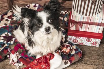 Dog, Christmas greeting card