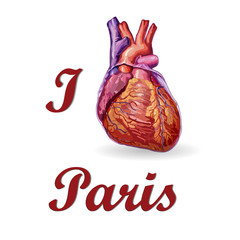 I love Paris . Human heart vector