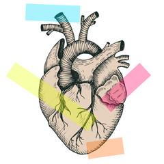 Anatomical abstract heart - vector vintage style detailed illustration, human organ