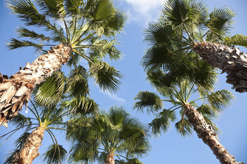 Palms - looking up