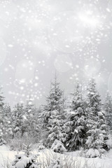 Winter landscape - snowfall in coniferous forest