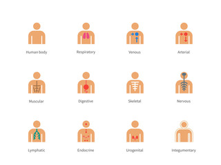 Human Body and Anatomy color icons on white background.