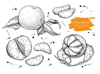 Vector hand drawn mandarin set. Engraved collection