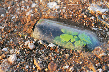 Plant growing in a discarded, half buried bottle.