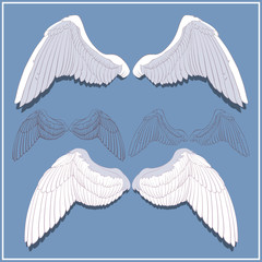 Graphic wings. Front and rear side. Hand-drawn. White and contour.