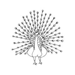 hand draw a  peacock