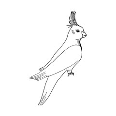 Hand draw parrot sketch style