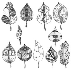 Forest leaves. Vector.
