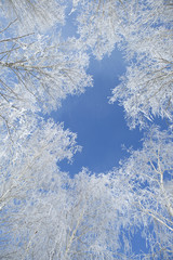 Landscape photo of a trees covered in fresh snow