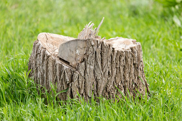 an old stump of a tree on a green grass