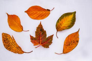 Colorful Autumn Leaf Diversity