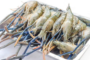 raw river prawn