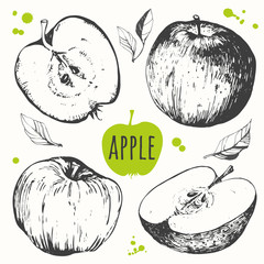 Hand drawn apples fruit. Fresh organic food.