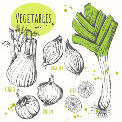 Set of hand drawn onion, leek, fennel, shallots.