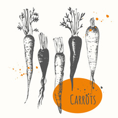 Set of hand drawn carrots. Black and white sketch food.