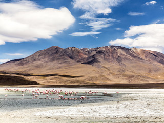Pink flamingos in wild nature of Bolivia, Eduardo Avaroa Nationa