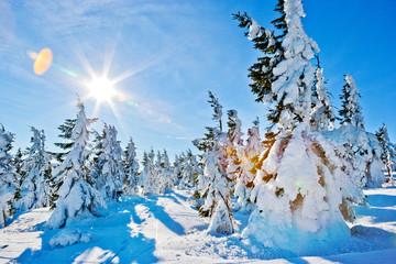 winter landscape near Snezka mount, Krkonose (Giant) mountains, Czech republic