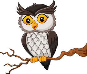 Cartoon owl bird posing on the tree