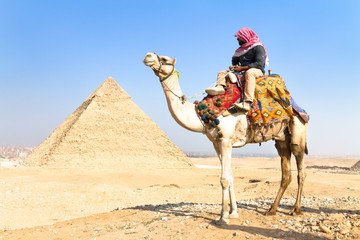 Zelfklevend Fotobehang Egypte Camel at Giza pyramides, Cairo, Egypt.
