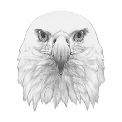 Portrait of Eagle. Hand drawn illustration.