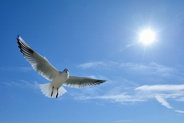 青色の空を飛ぶ白色の鳥