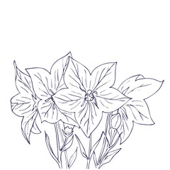 Hand drawn vector with bell flowers