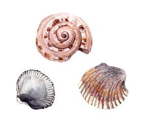 Watercolor painted sea shells