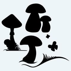 Boletus Edulis and mushroom Amanita. Isolated on blue background. Vector silhouettes