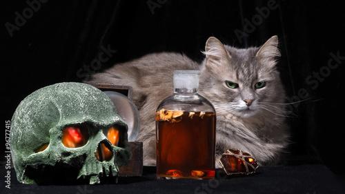 Алхимия кот