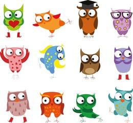 Cute birds owls in vector. Cartoon set