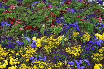 Bunte Frühlingsblumen blühen im Park