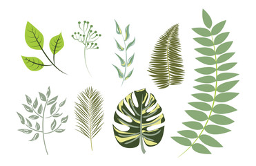 Vector Collection Exotic leaves (individual objects)