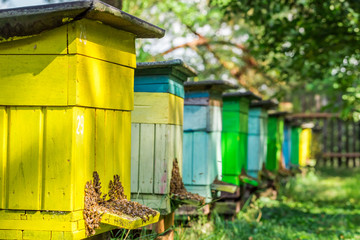 Wooden beehives in garden