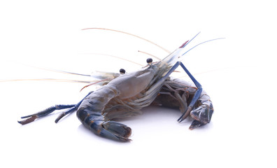 The shrimp isolated on white background