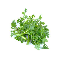 parsley piece isolated on the white background